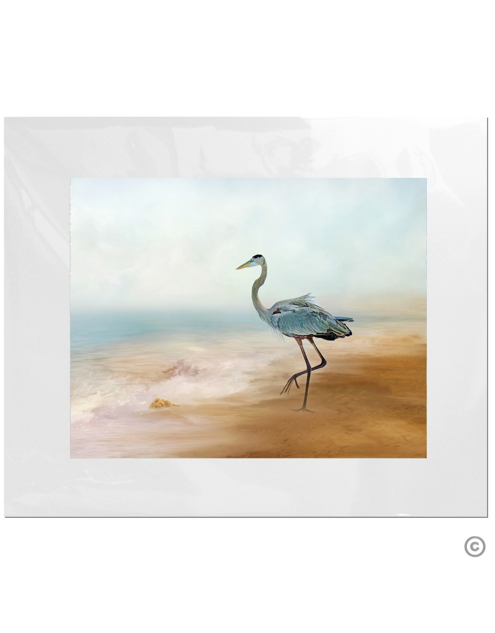 Maureen Terrien Photography Art Print Heron on Beach 11x14 - 8x10 Matted