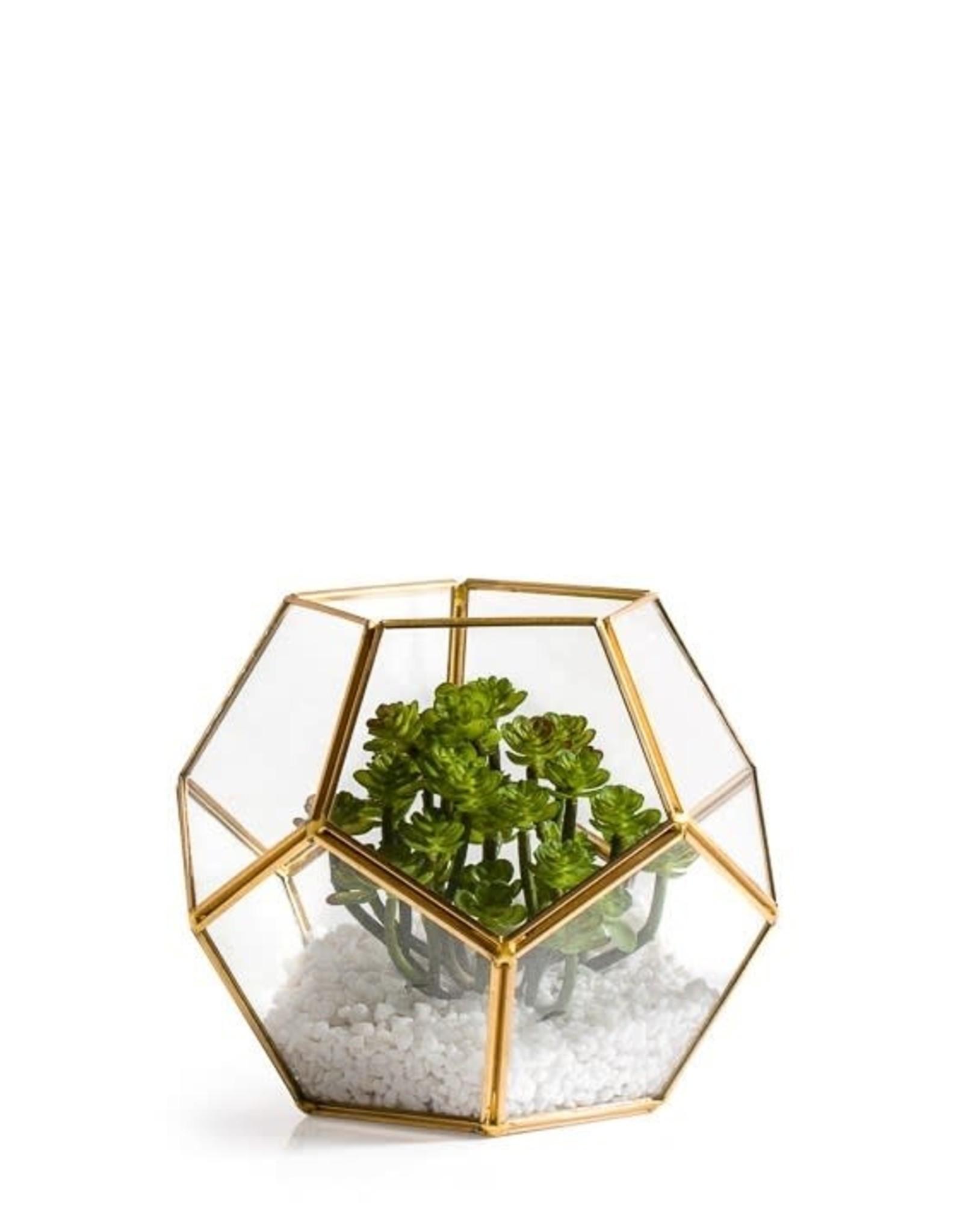 Terrarium ORO - Verre & laiton