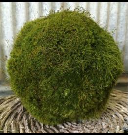 Forever Green Ar Small Moss Ball