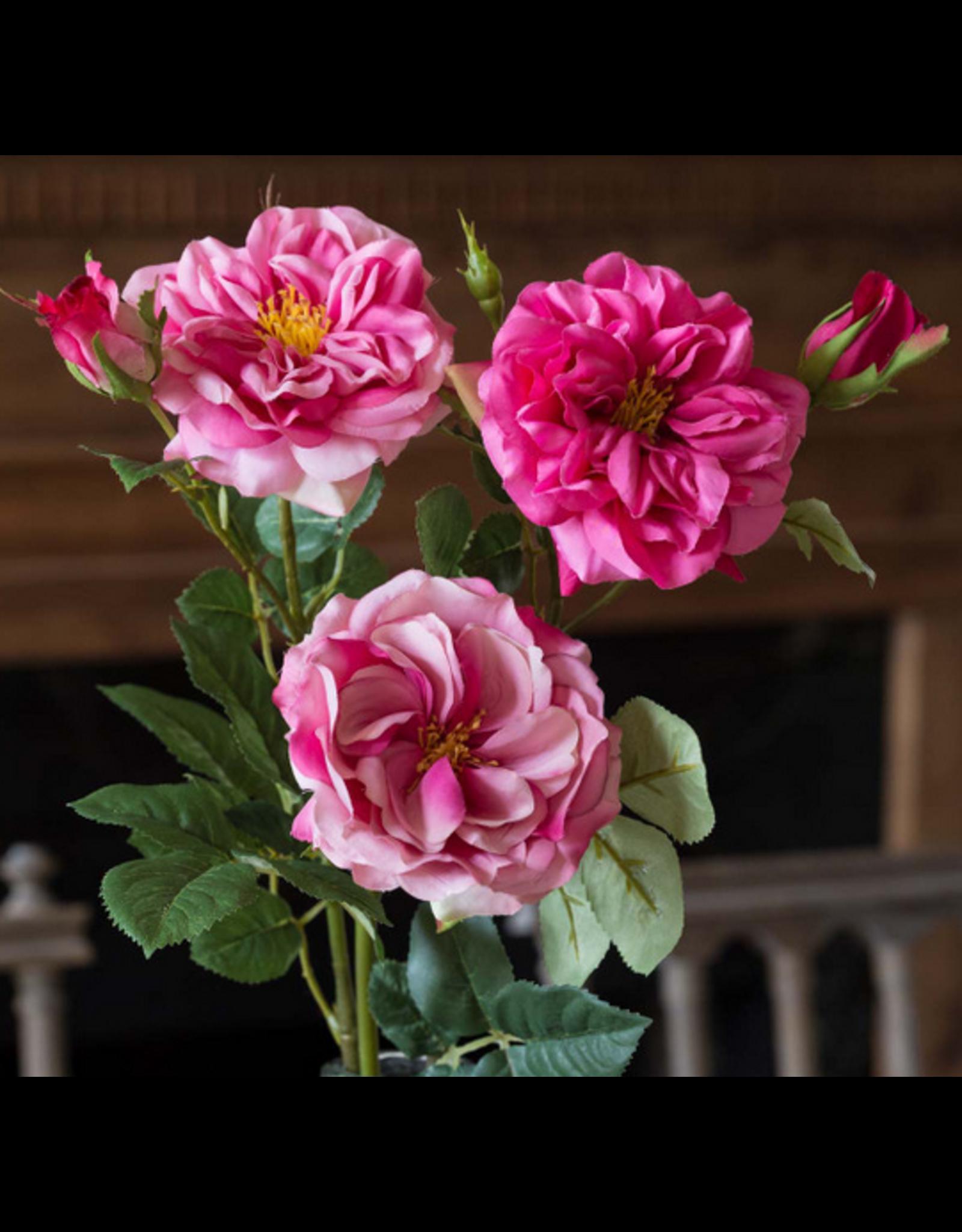 Park Hill Gathered Garden Roses-Beauty