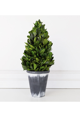 """Adams & Co. 16.5""""  Preserved Tower Boxwood"""