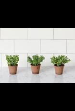 Audrey's Herb Pot