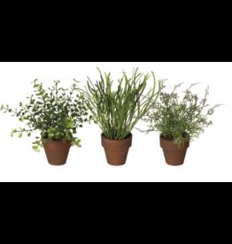 Sullivans Foliage Potted Plant