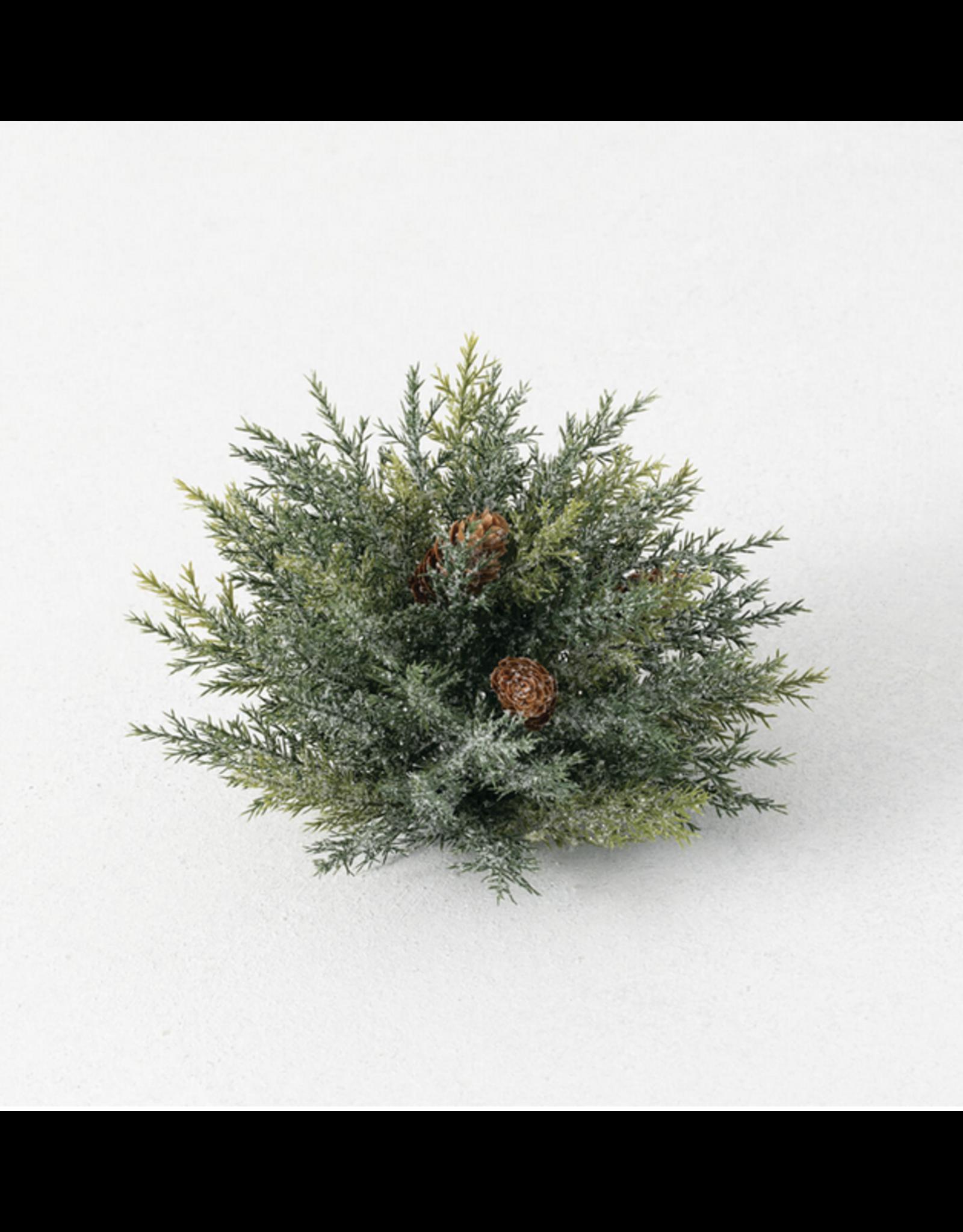 Sullivans Frosted Arborvitae Orb