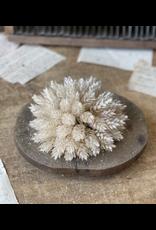 Lancaster & Vintage Pearl Hops Half Sphere