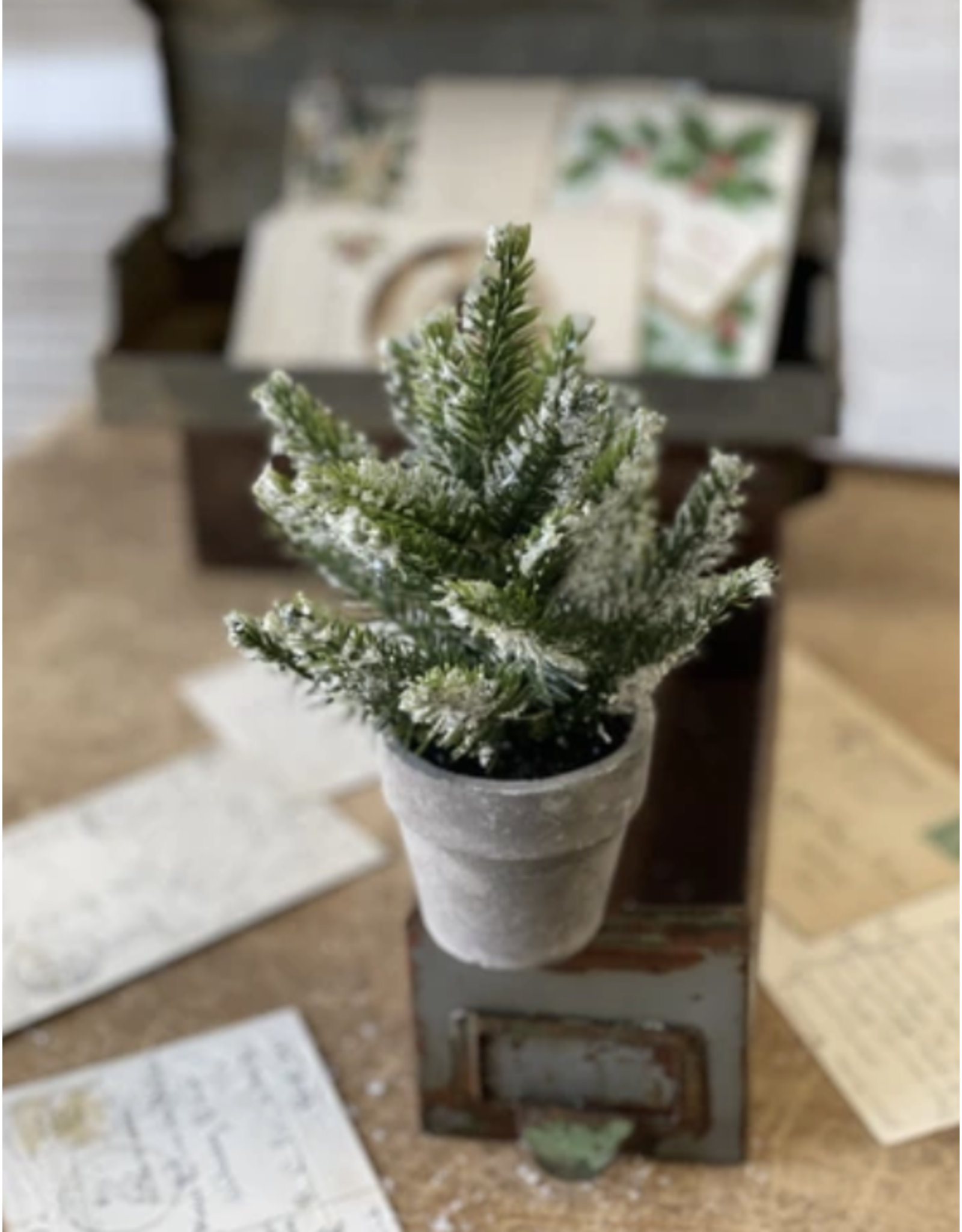 """Lancaster & Vintage Potted Icy Pine 7"""""""