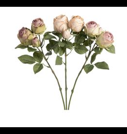 Park Hill English Garden Rose