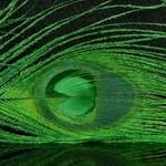 Natures Spirit NATURES SPIRIT BLEACHED & DYED PEACOCK STICKS - 4 sticks Green