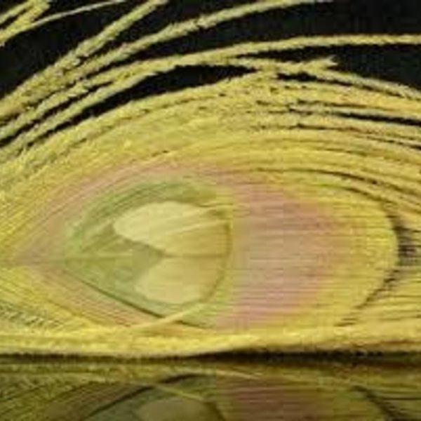 Natures Spirit NATURES SPIRIT BLEACHED & DYED PEACOCK STICKS - 4 sticks PALE MORNING DUN