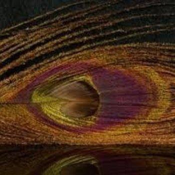 Natures Spirit NATURE'S SPIRIT BLEACHED & DYED PEACOCK STICKS - 4 sticks Brown 23