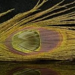 Natures Spirit NATURE'S SPIRIT BLEACHED & DYED PEACOCK STICKS - 4 sticks Tan 2