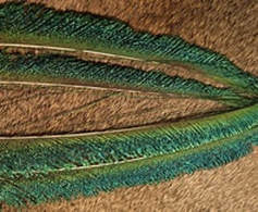Natures Spirit NATURES SPIRIT -  BLEACHED AND DYED PEACOCK STICKS - FLUO GREEN UV - 79a