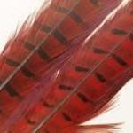 Natures Spirit NATURES SPIRIT RINGNECK PHEASANT CENTER TAILS - 1 select pair Red