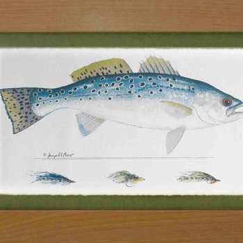 Wind River Gear Watercolor  Wall Art -Sea Trout