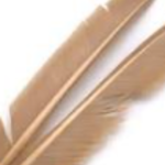 Natures Spirit TURKEY BIOT QUILL PIECES - 2 select pieces Light Cahill