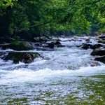 Guided Trip - Great Smoky Mountains National Park -Walk and Wade