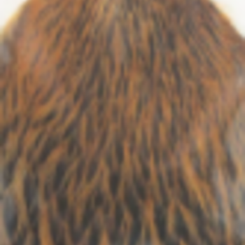 Whiting Rooster Soft Hackle with chickabou - Tan