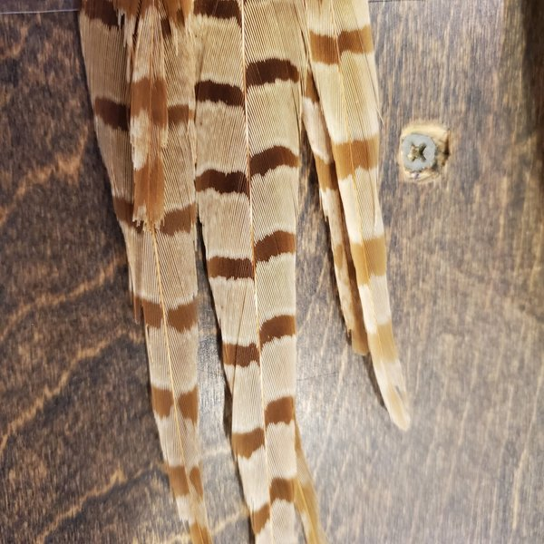 """RINGNECK PHEASANT SIDE TAILS - 6 tails - 12"""" to 14"""" Bleached"""