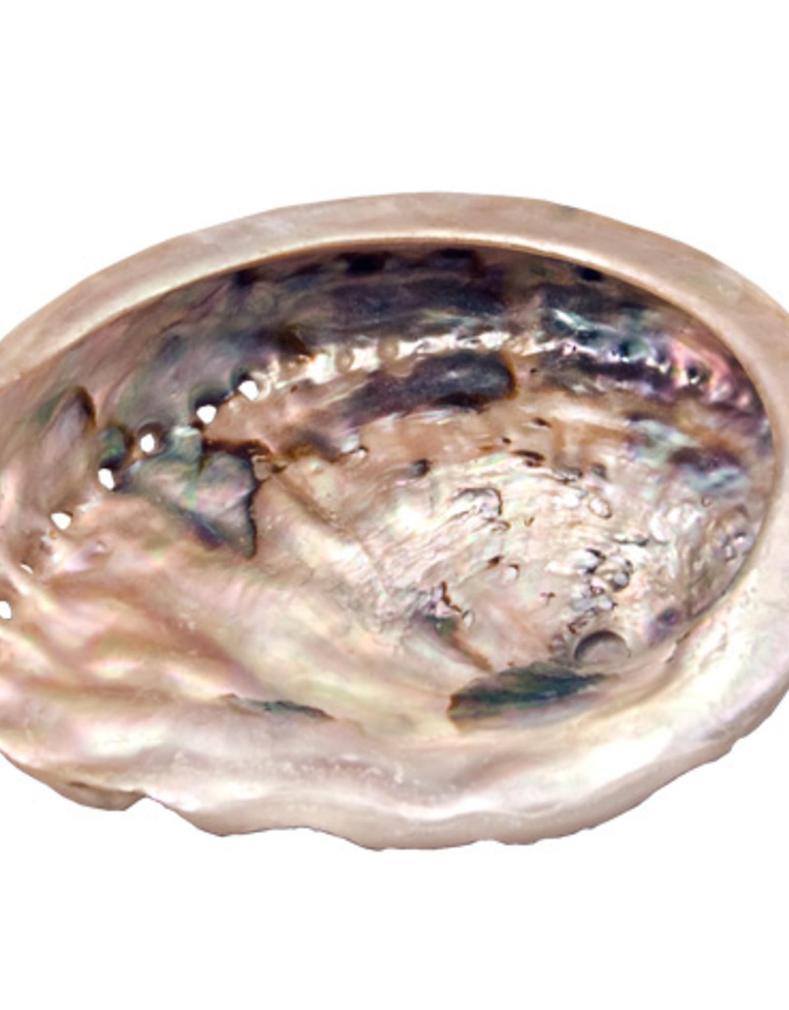 """abalone Shell Small 3.5"""""""