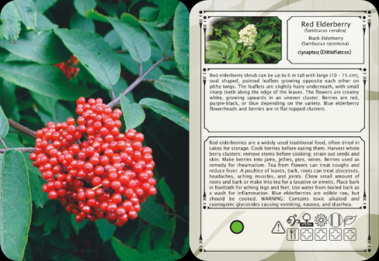 Pacific Northwest Plant Knowledge Cards-2