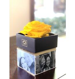 Yellow Rose in Box