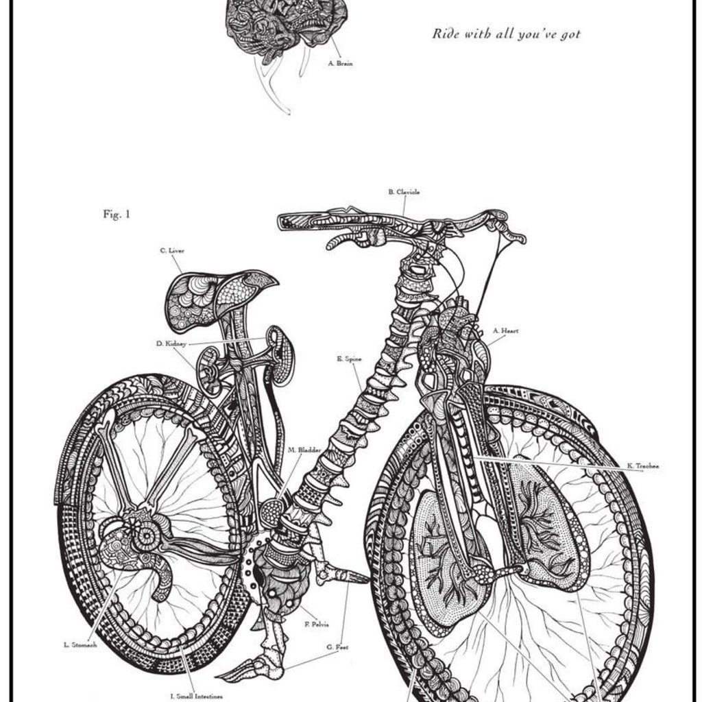 Artery Ink Bicycle Anatomy Print