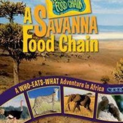 Rebecca Wojahn A Savanna Food Chain
