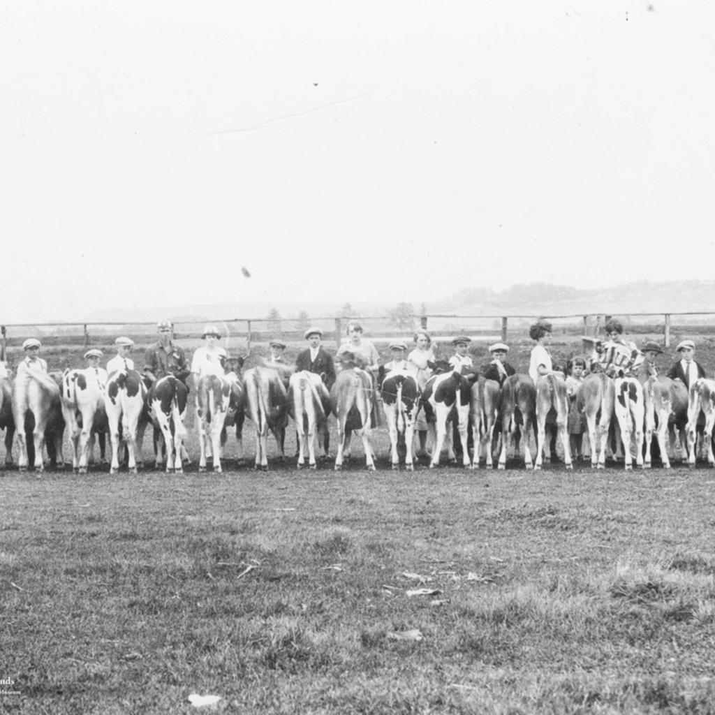 Volume One Vintage Cow Print