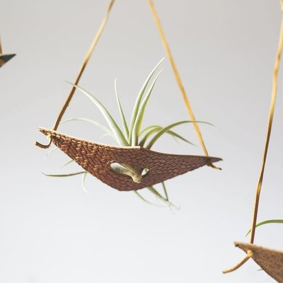 Permanent Baggage Small Leather Air Plant Hanger - Assorted Colors