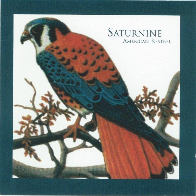 Saturnine American Kestrel
