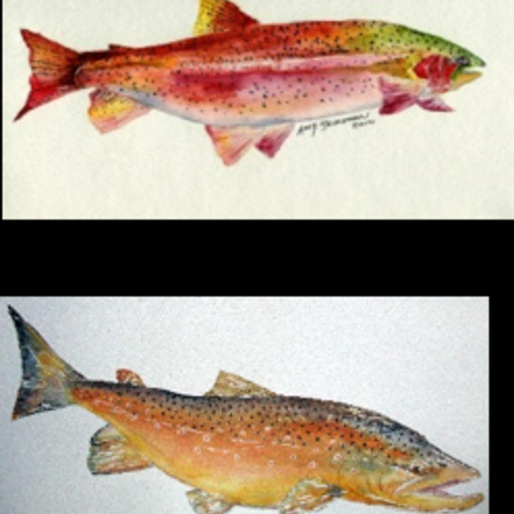 Amy Beidleman Fish Greeting Card Set