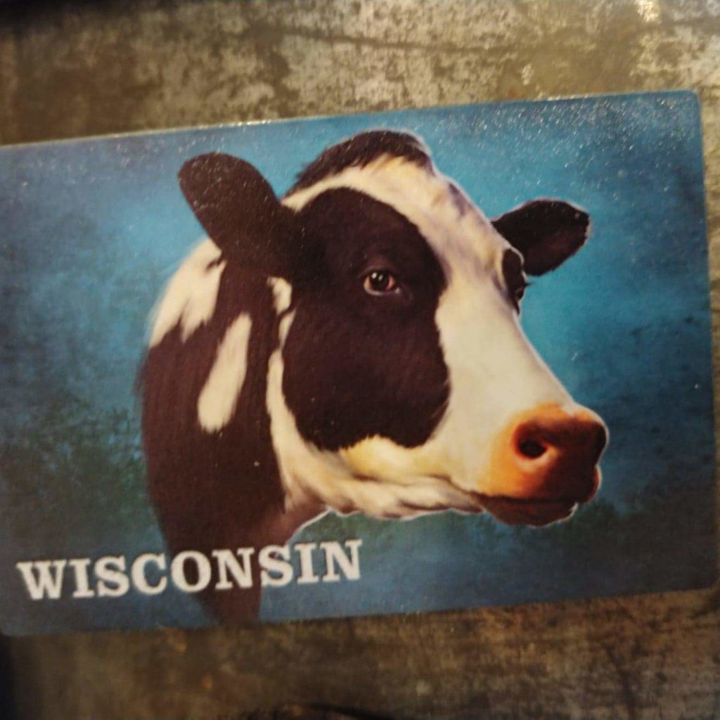 Volume One Cow Portrait Magnet