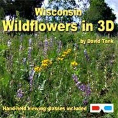 David Tank Wisconsin Wildflowers in 3D
