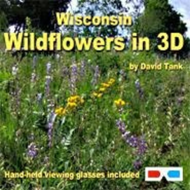 David Tank Wisconsin Wildflowers in 3D