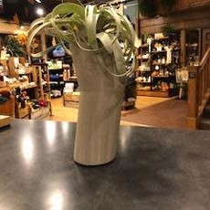 Concrete Pig Concrete Vase - Large