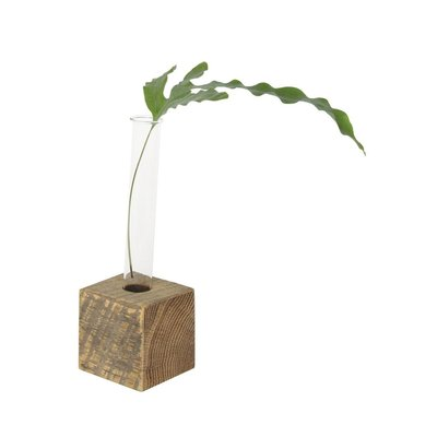 June & December Propagation Vase - Single