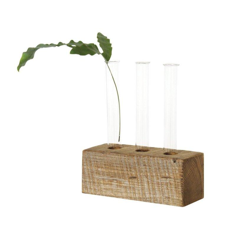 June & December Propagation Vase - Set of Three