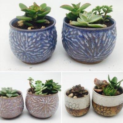 Pottery by Paula Ceramic Planter w/ Live Plants