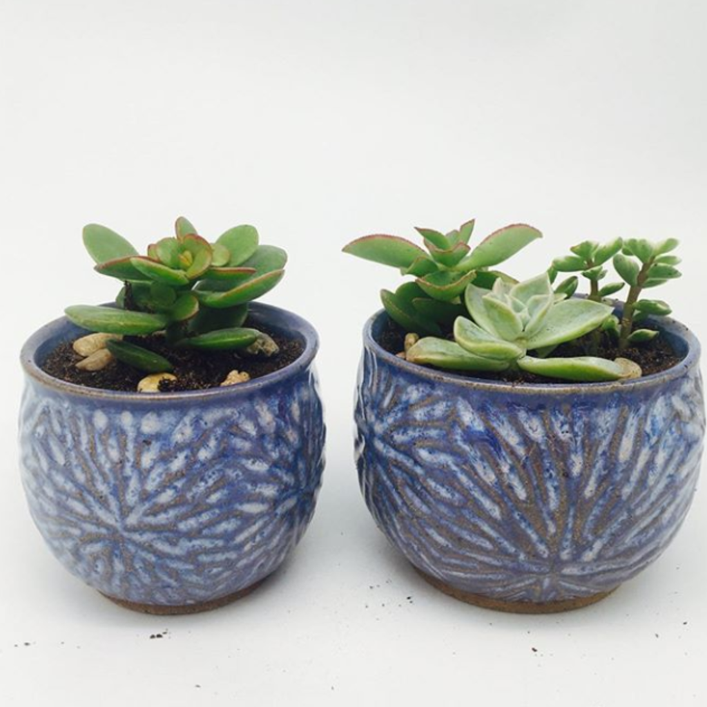 Pottery by Paula Ceramic Planter Live Plants