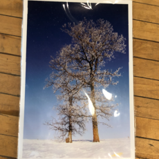 Lloyd Fleig Falling Frost
