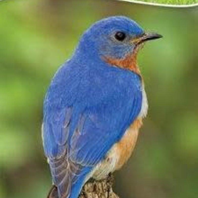 Stan Tekiela Birds of the Midwest