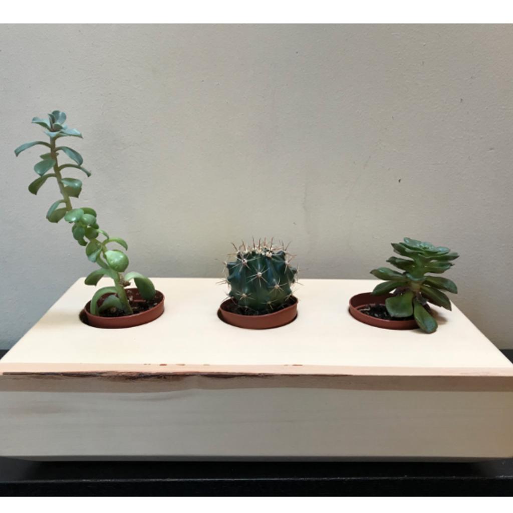 Whee Creative Wood Succulent Planter - Triple