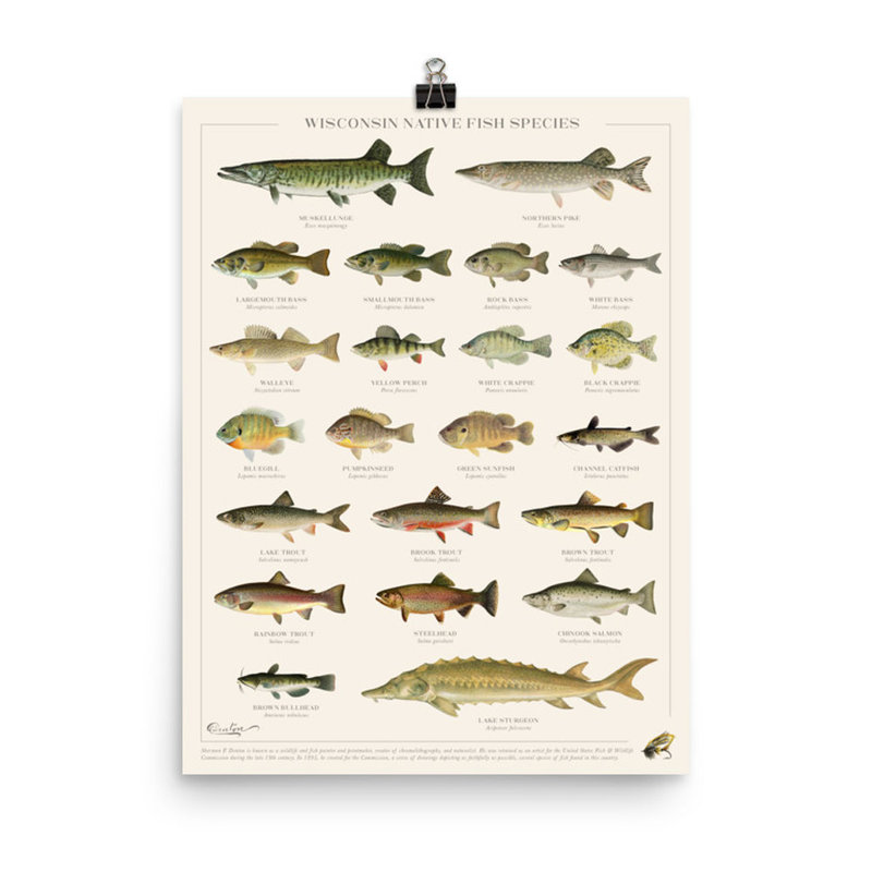 Forward Apparel Company Wisconsin Native Fish Species Poster (8x10)