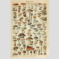 Volume One Mushrooms Print (12x18)