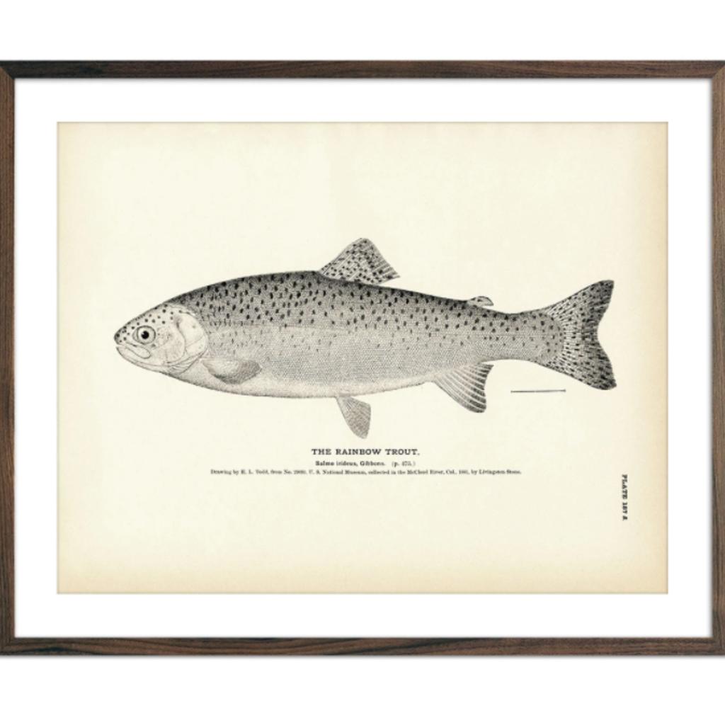 "Rainbow Trout Print (8.5"" x 11"" )"