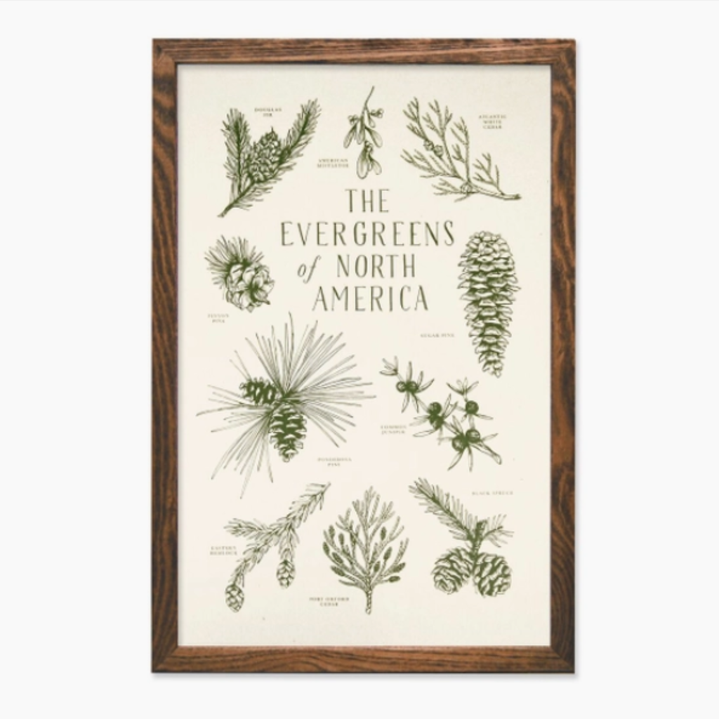 Evergreens of North America Print (11x17)