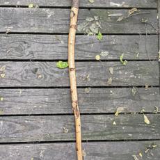 Live Edge Walking Stick