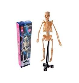 Edu-Toys Human Skeleton