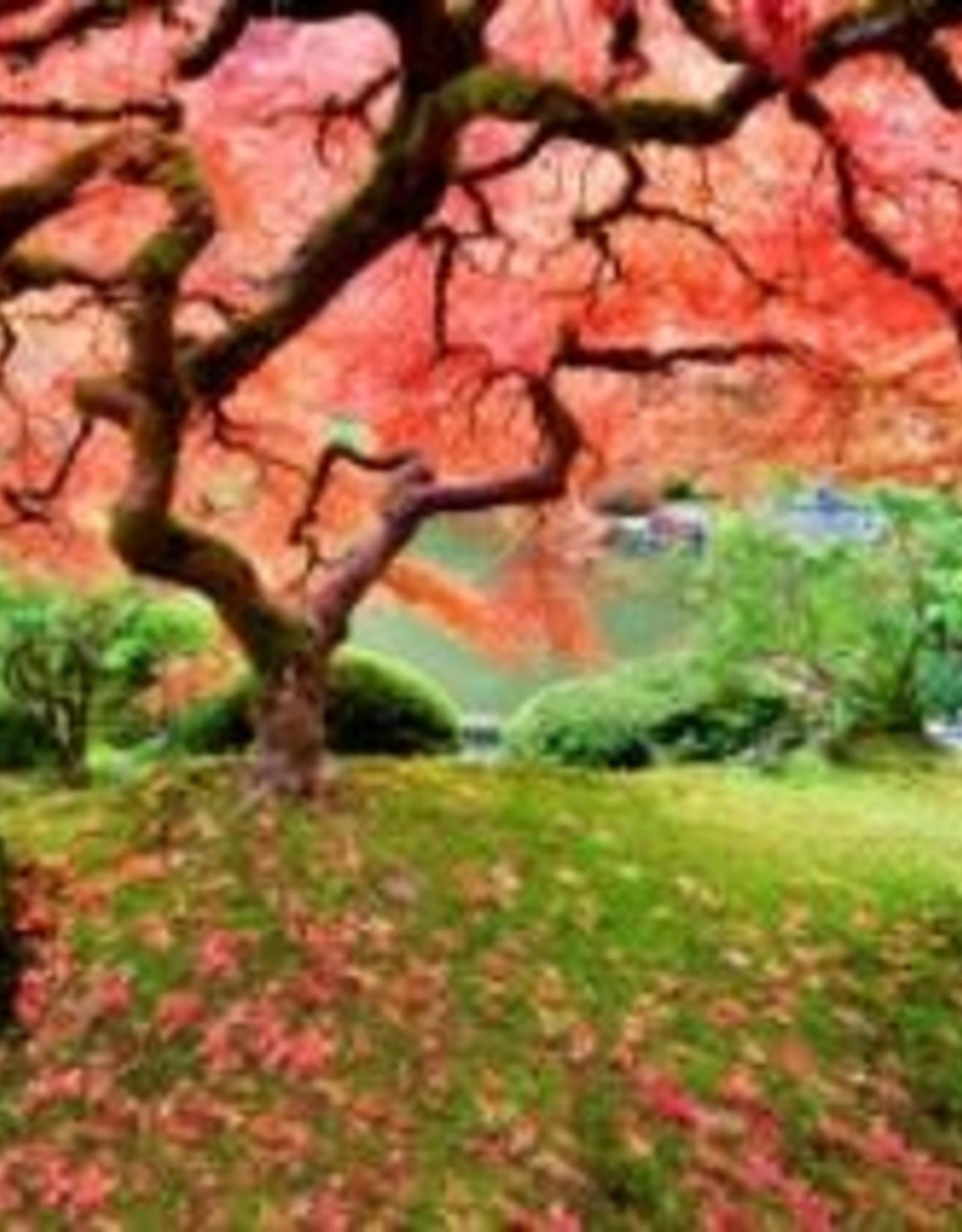 Peter Pauper Press Japanese Maple Tree 1000pc