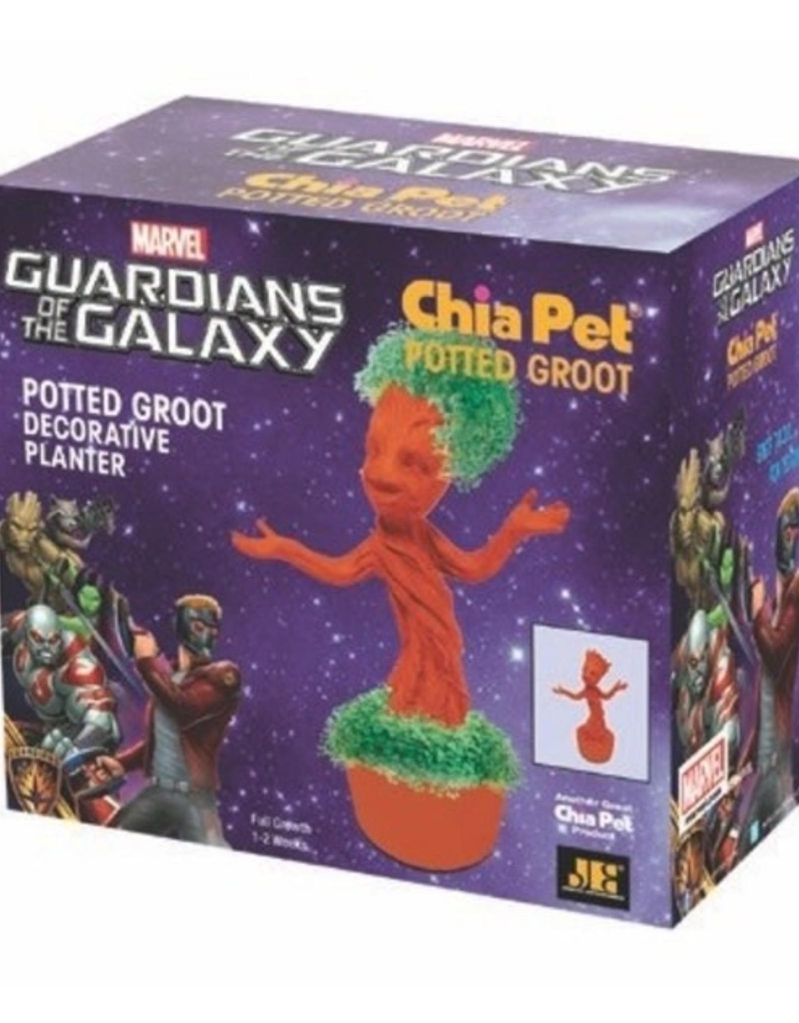 Chia Pet Chia Groot Potted